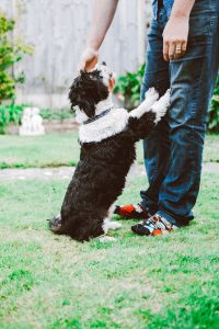 Man-Standing-While-Holding-Puppy-scaled